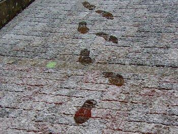 42.9:350:263:250:188:Footprint:center:1:1::1: