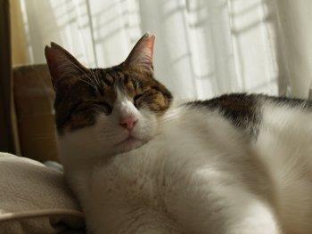 13.9:350:263:250:188:Cat:center:1:1::1: