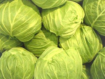 27:350:263:250:188:Cabbage:center:1:1::1:
