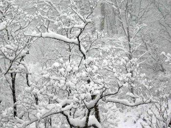 37.6:350:263:250:188:Snow:center:1:1::1: