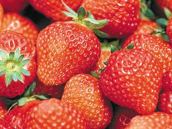 36.5:350:262:250:187:Fragaria:center:1:1::1: