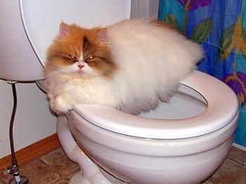 20.5:350:263:250:188:Toilet:center:1:1::1: