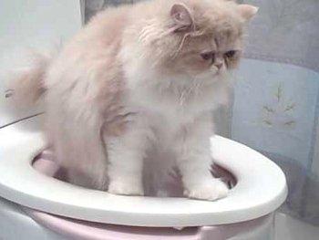 13.6:350:263:250:188:Toilet:center:1:1::1: