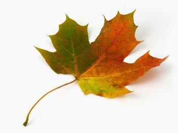 11.9:350:263:250:188:Leaf:center:1:1::1:
