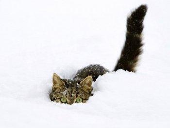 8.8:350:263:250:188:Snowstorm:center:1:1::1: