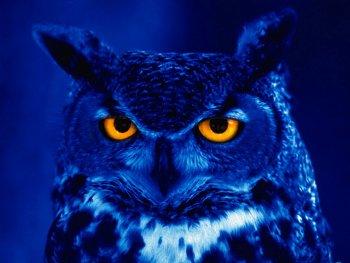 19.8:350:263:250:188:Owl:center:1:1::1: