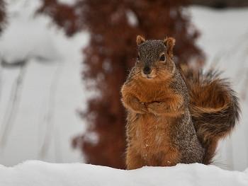 24.1:350:263:250:188:Squirrel:center:1:1::1: