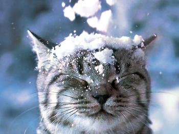 96:350:263:250:188:SnowCat:center:1:1::1: