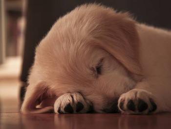 20.7:350:263:250:188:SleepyDog:center:1:1::1: