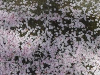 45.3:350:263:250:188:Sakura:center:1:1::1: